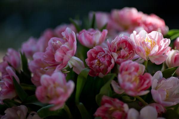 decoracao casamento tulipas rosa