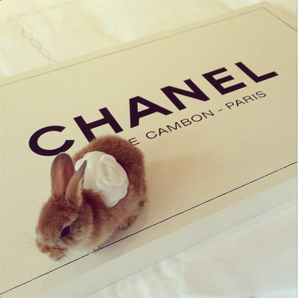 cecil-delevingne-rabbit-bunny-chanel-poppy-wedding