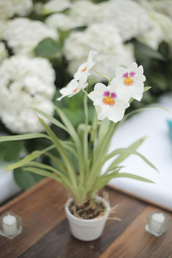 casamento-praia-juquehy-vestido-noiva-pronovias-decoracao-flor-forma-fotos-Mel-e-Cleber-19