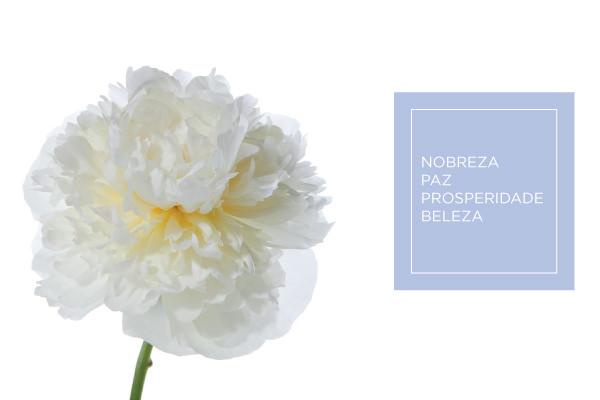 cz-bouquet-peonia