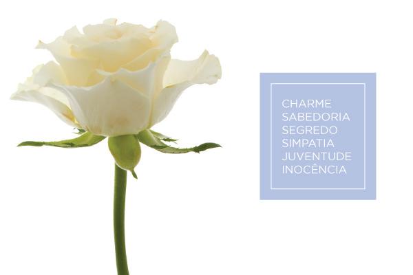 cz-bouquet-rosa