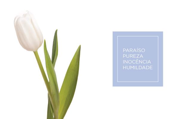cz-bouquet-tulipa
