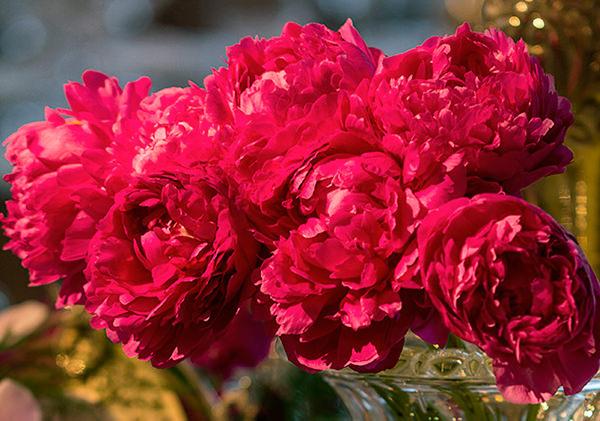 casamento-decoracao-roberta-fasano-rosa-branco-10